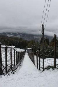 ohrana-zimoy